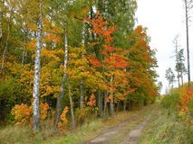 Path and colorful autumn trees, Lithuania stock photography