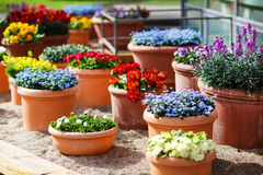 Beautiful different flowers in ceramic flowerpots in spring park Royalty Free Stock Photo