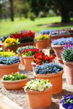 Beautiful different flowers in ceramic flowerpots in spring park Stock Photo