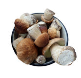Beautiful and different mushrooms isolated Royalty Free Stock Photography