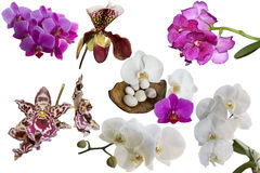Beautiful different orchids. Royalty Free Stock Image