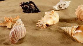 Beautiful different sea shellsand starfish on stock video footage