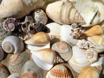 Beautiful different shells on sand Royalty Free Stock Images