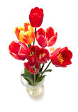 Beautiful different tulips  in vase Stock Photography