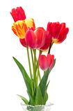 Beautiful different tulips  in vase Royalty Free Stock Photo