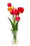 Beautiful different tulips  in vase Stock Photos