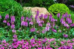 Digitalis flower. Beautiful digitalis flower in garden stock photos