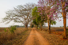 Beautiful dirt road with amazing light Stock Image