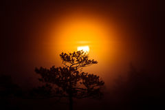 A beautiful disc of a rising sun behind the pine tree. Dark, mysterious morning landscape. Apocalyptic look. Stock Photos