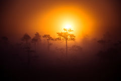 A beautiful disc of a rising sun behind the pine tree. Dark, mysterious morning landscape. Apocalyptic look. Royalty Free Stock Photography