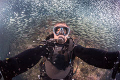Beautiful diver in fish and corals reef background Stock Image