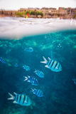 Beautiful and diverse coral reef with fish of the red sea Stock Photos