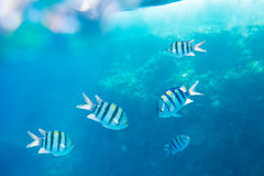 Beautiful and diverse coral reef with fish of the red sea Royalty Free Stock Photo