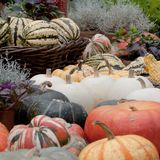 Harvest season and preparations for the next season. Beautiful and diverse pumpkins and flowers in provincial, agriculture stock images