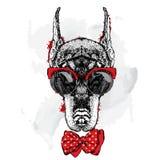 Beautiful Doberman wearing glasses and tie. Pedigree dog. Royalty Free Stock Images