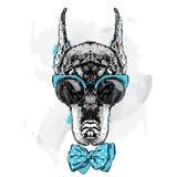 Beautiful Doberman wearing glasses and tie. Pedigree dog. Royalty Free Stock Image