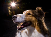 Beautiful Dog Stock Images