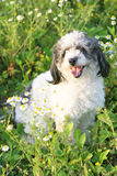 Beautiful Dog. Standing in the grass Stock Image