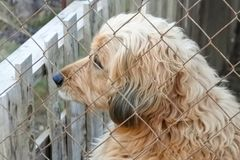 Beautiful dog. Looking resigned from his confinement Stock Photos