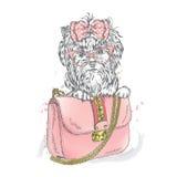 A beautiful dog and beautiful handbag. Clutch. Royalty Free Stock Image