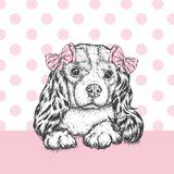 A beautiful dog with a bow on his head. Cute Spaniel. Purebred puppy. Vector illustration for a postcard or a poster, print for clothes and accessories Stock Images