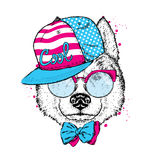 A beautiful dog in a cap, glasses and a tie. Vector illustration for a postcard or poster, print on clothes. Purebred puppy. Husky. A beautiful dog in a cap Stock Image