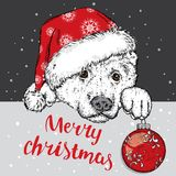 A beautiful dog in a Christmas hat and a Christmas ball. Vector illustration for a postcard or a poster. Purebred puppy. Royalty Free Stock Photography