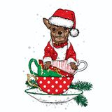 A beautiful dog in a Christmas hat sits in cups. Vector illustration. New Year`s and Christmas. Chihuahas. Stock Photo