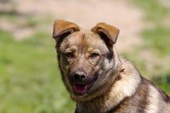 Beautiful dog closeup Royalty Free Stock Photo