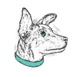 A beautiful dog in a collar. Cute puppy. Vector illustration for a postcard or a poster, print for clothes.  Stock Images