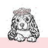 Beautiful dog in the crown. Cute Spaniel. Purebred puppy. Vector illustration for a postcard or a poster, print for clothes and accessories. A princess Stock Photos