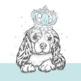 Beautiful dog in the crown. Cute Spaniel. Purebred puppy. Vector illustration for a postcard or a poster, print for clothes. Beautiful dog in the crown. Cute Royalty Free Stock Image