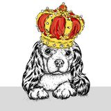 Beautiful dog in the crown. Cute Spaniel. Purebred puppy. Vector illustration for a postcard or a poster, print for clothes. Beautiful dog in the crown. Cute Stock Photography