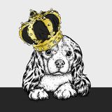 Beautiful dog in the crown. Cute Spaniel. Purebred puppy. Vector illustration for a postcard or a poster, print for clothes. Beautiful dog in the crown. Cute Royalty Free Stock Photo