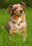 Beautiful dog with curious expression Royalty Free Stock Photo