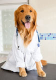Dog as a vet Stock Photography
