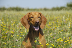 Beautiful Dog In Fairy Land Royalty Free Stock Photos