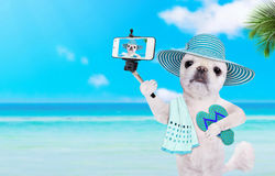 Beautiful dog with flip-flops taking a selfie together with a smartphone. Royalty Free Stock Image