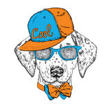 Beautiful dog with glasses, cap and tie. Vector illustration. Cute Dalmatians. Puppy. Royalty Free Stock Photo