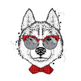 A beautiful dog with glasses and a tie. Vector illustration for a postcard or poster, print on clothes. Purebred puppy. Stock Photo