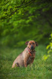 Beautiful dog on the grass animal Stock Photography