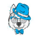 A beautiful dog in a hat, glasses and a tie. Vector illustration for a postcard or poster, print on clothes. Purebred puppy. Royalty Free Stock Photos