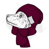 A beautiful dog in a knitted hat and scarf. Cute puppy. Vector illustration for a postcard or a poster, print for clothes. A beautiful dog in a knitted hat and Stock Photo