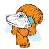 A beautiful dog in a knitted hat and scarf. Cute puppy. Vector illustration for a postcard or a poster, print for clothes. A beautiful dog in a knitted hat and Stock Images