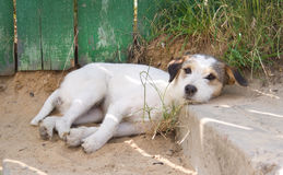 Beautiful dog Stock Images