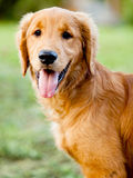 Beautiful dog at the park Stock Photos