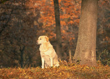 Beautiful dog in a park Stock Photography