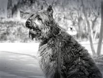 Beautiful dog in a park stock images