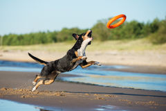 Beautiful dog playing on the beach Royalty Free Stock Images