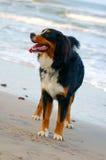 Beautiful dog portrait Royalty Free Stock Photography
